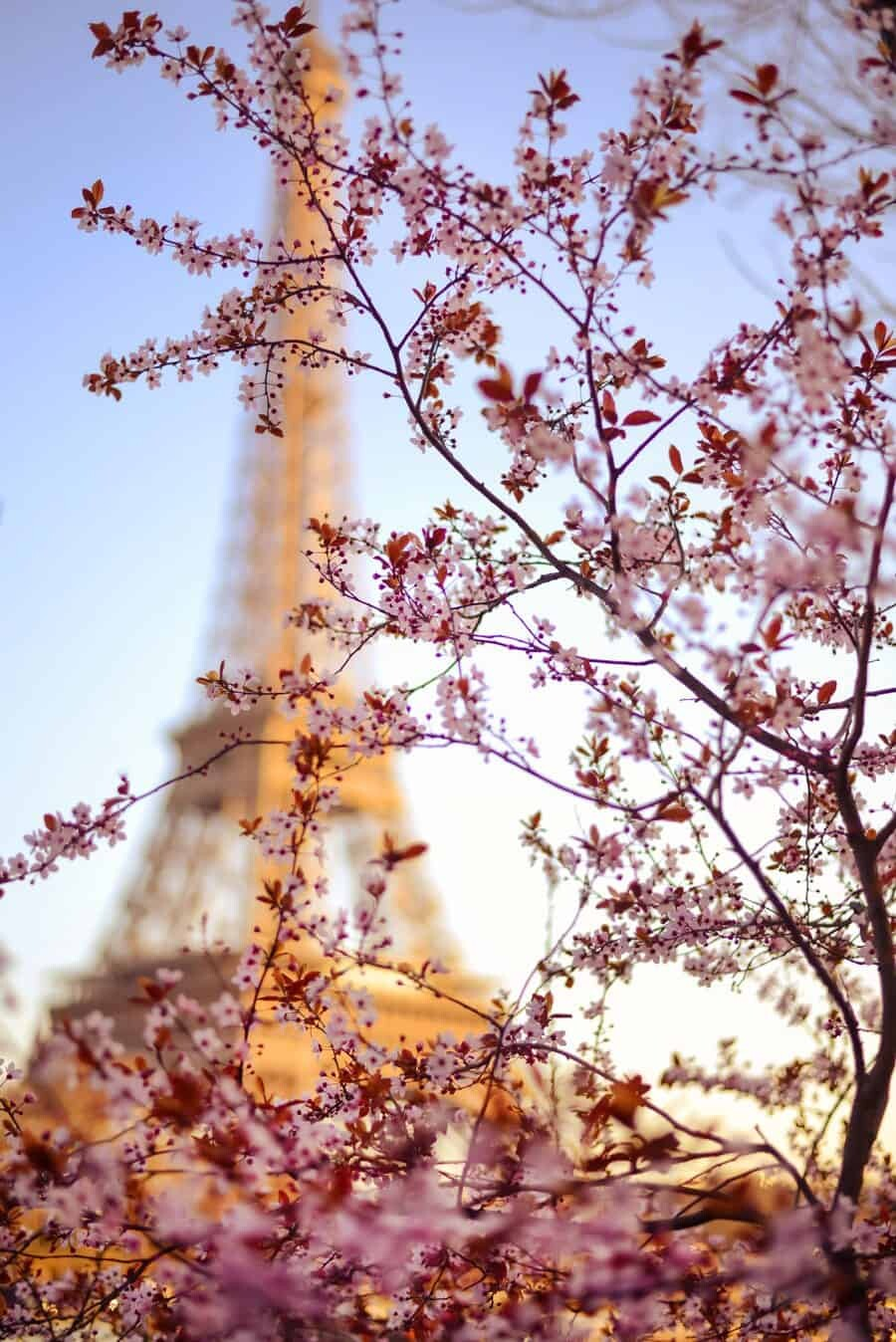 Focus - Having a monument as obvious of the Eiffel Tower allows you to play around with focus and feature another subject in the forefront of your photograph. In this case I used the beautiful blossom flowers that were in bloom along the Seine River and ensured the shape of the tower was still visible.