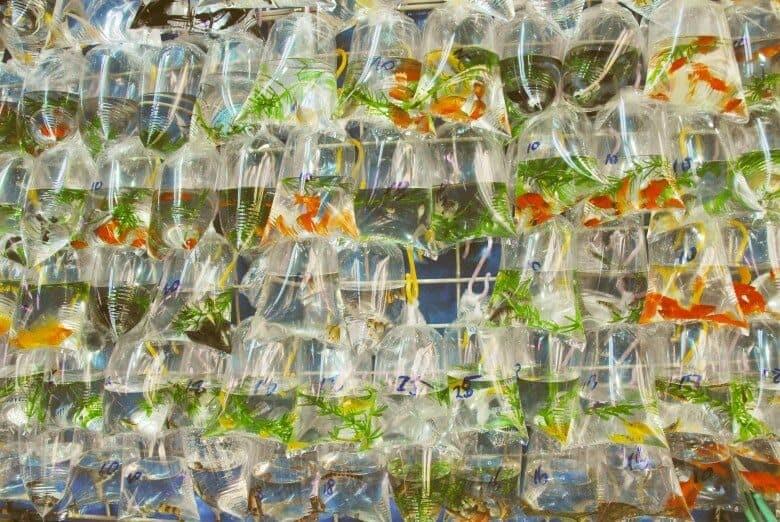 Hong Kong Goldfish Market Kowloon