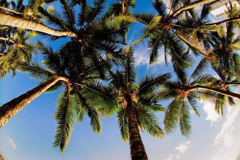 Hawaii_TheWanderingLens16