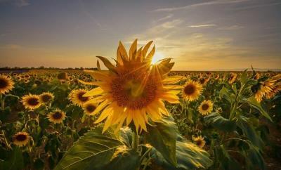 Sun Star Photography - The Wandering Lens