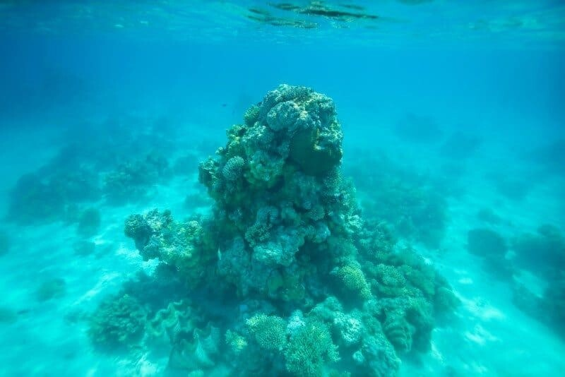 Looking down can still look great however as you can see in the following example, the same chunk of coral looks much more impressive looking up.