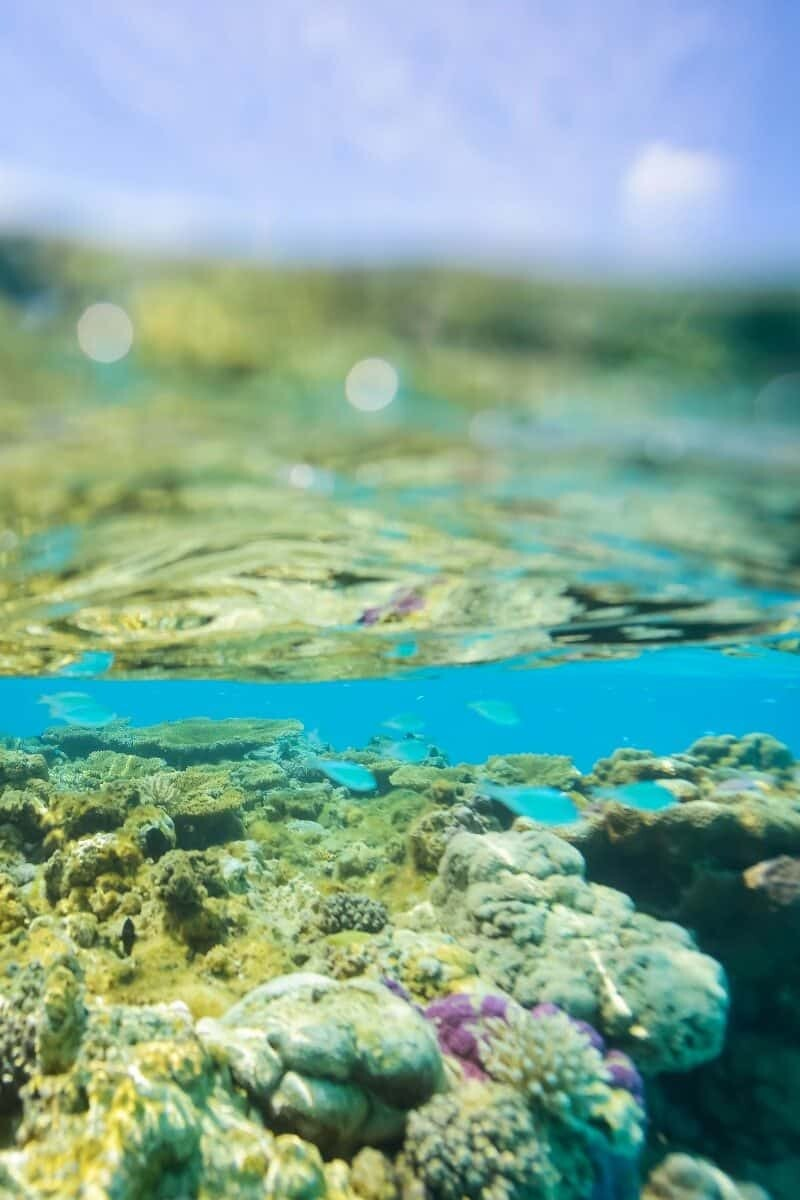 Underwater Photography Composition 05