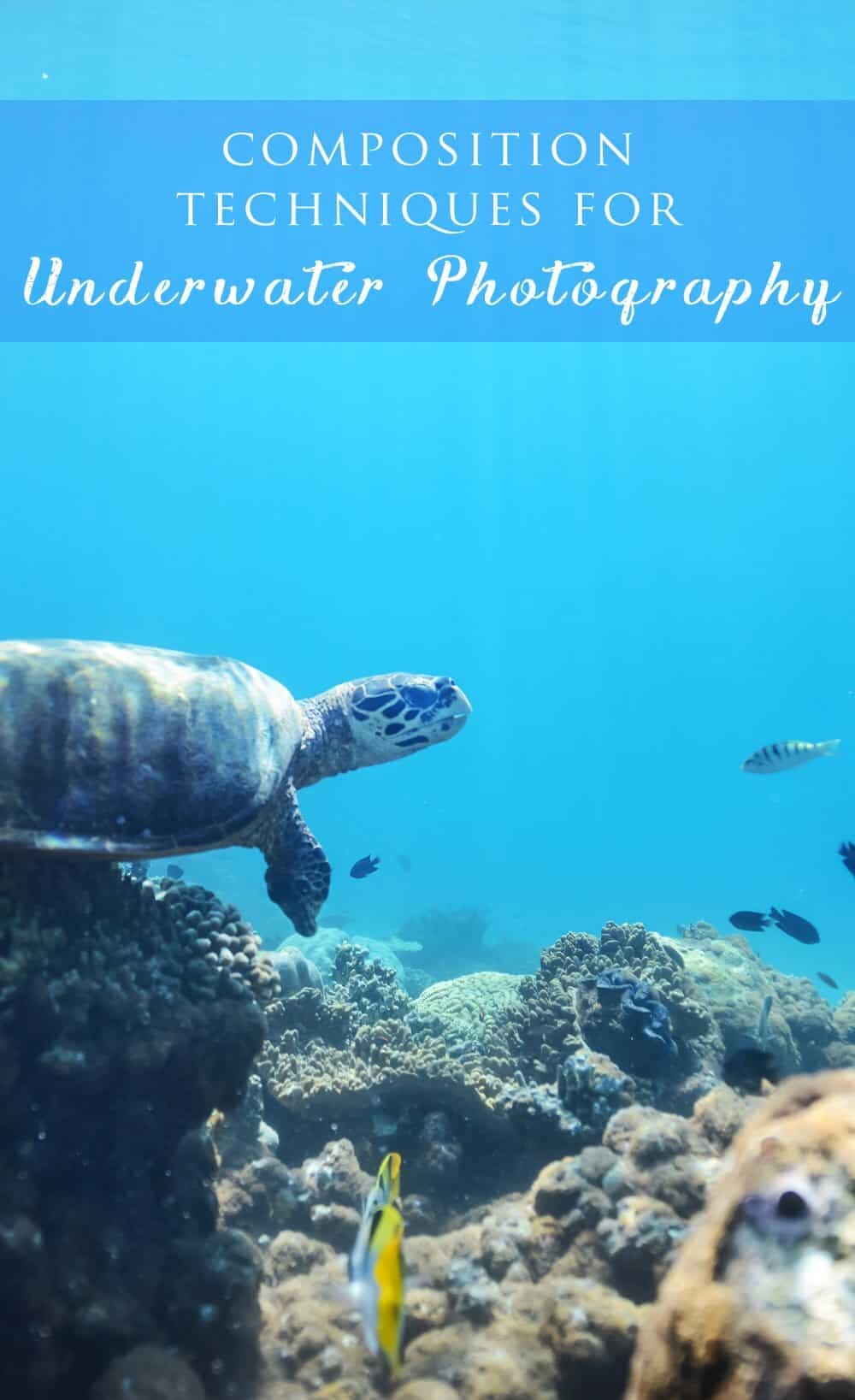 Underwater Photography Composition Techniques by The Wandering Lens www.thewanderinglens.com