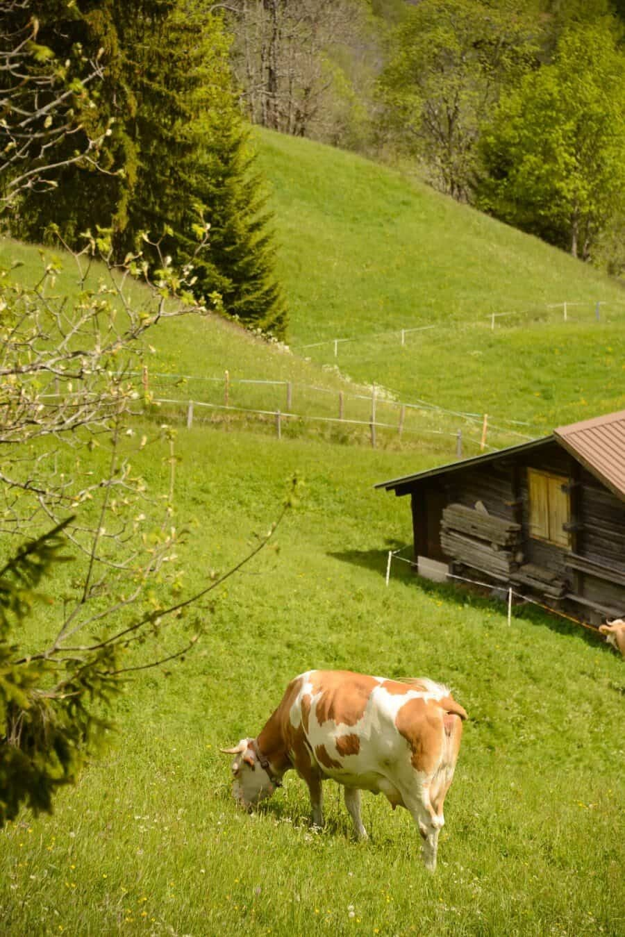 jungfrau-travel-guide-wengen-lauterbrunnen-and-grindelwald-by-the-wandering-lens-71