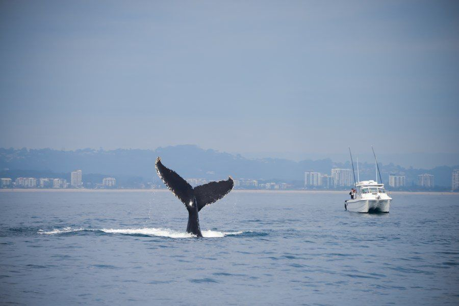 sunshine-coast-whale-swim-queensland-australia-08