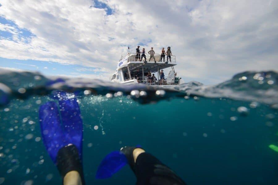 sunshine-coast-whale-swim-queensland-australia-09