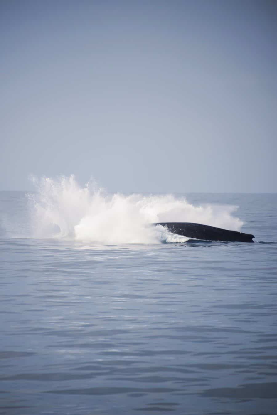 sunshine-coast-whale-swim-queensland-australia-10