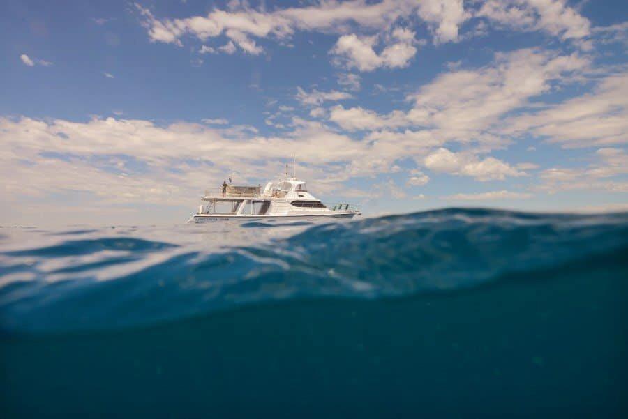 sunshine-coast-whale-swim-queensland-australia-11