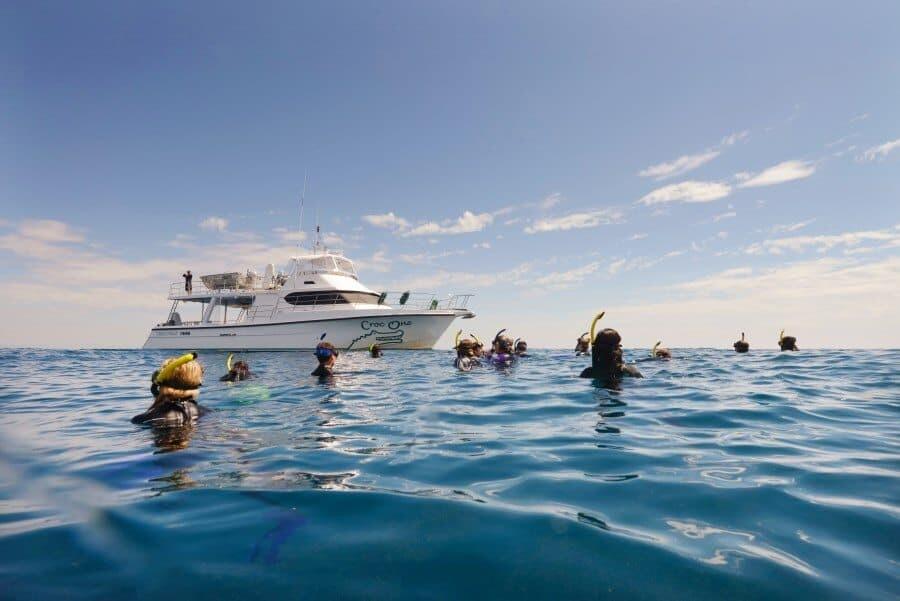 sunshine-coast-whale-swim-queensland-australia-12