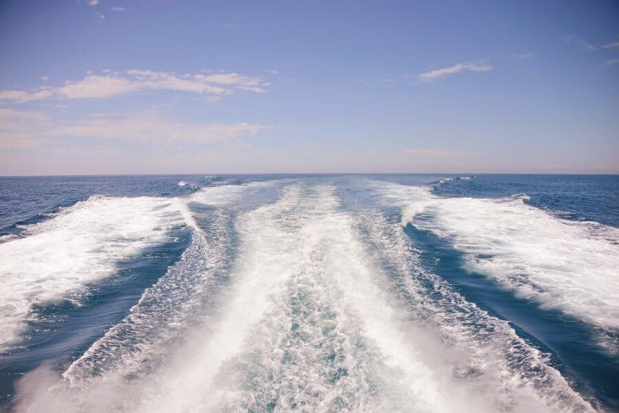 sunshine-coast-whale-swim-queensland-australia-13