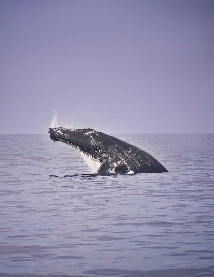 sunshine-coast-whale-swim-by-the-wandering-lens-sunreef-mooloolaba-11