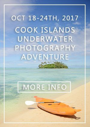 Cook Islands Underwater Photography Workshop - Travel Photography