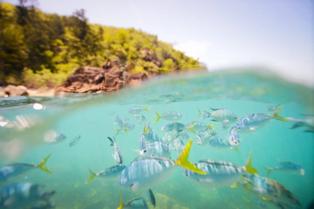 Underwater Photography: How to Take Underwater Split-level Photos by The Wandering Lens