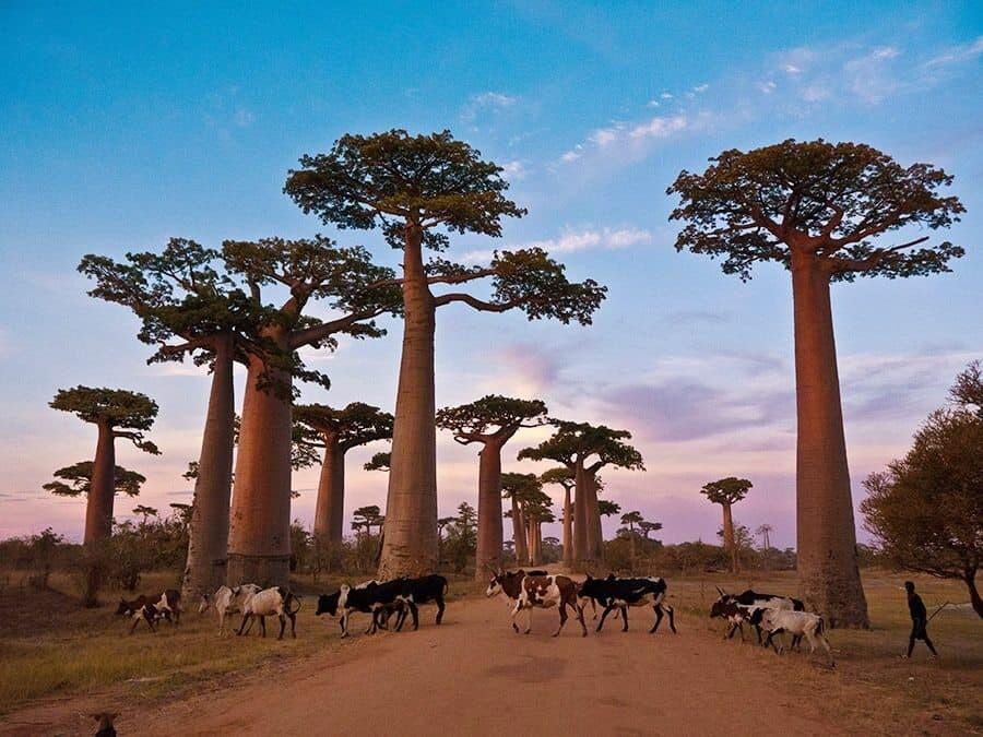 Destination: Madagascar, Photo Credit Victoria Brewood