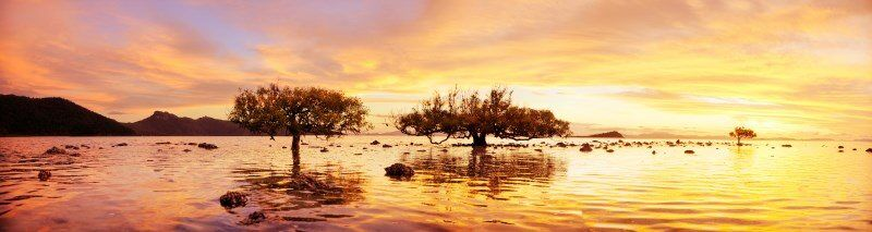 Hayman Island - Sunset at The Tidal Mangrove Trees