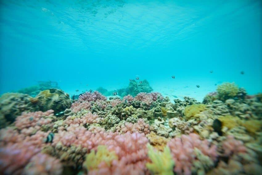 Aitutaki_Cook_Islands27