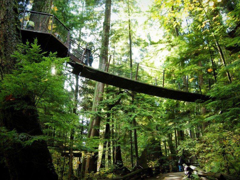 Capilano Suspension Bridge, Vancouver - The Wandering Lens