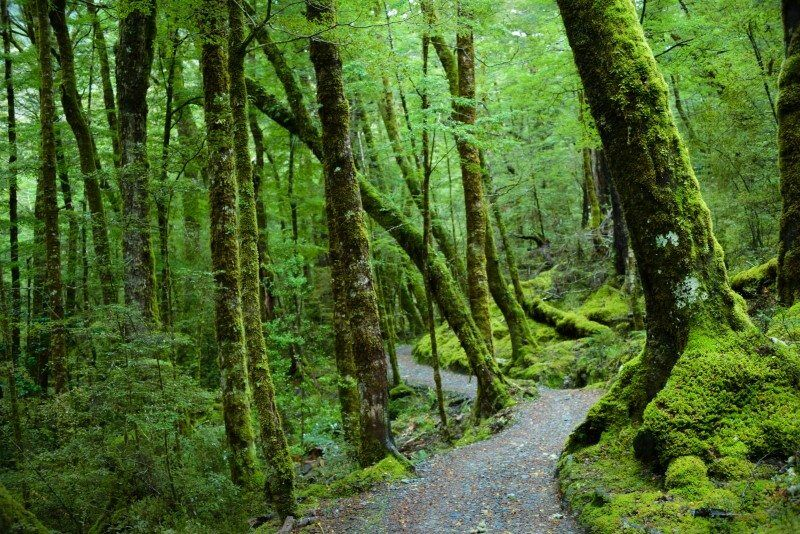 Routeburn Track for the Queenstown Location Guide by The Wandering Lens
