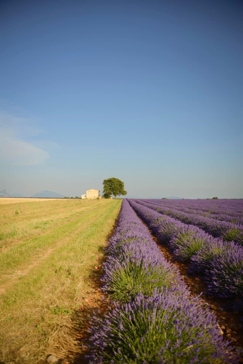 Provence Lavender Fields - A Photographer's Guide to