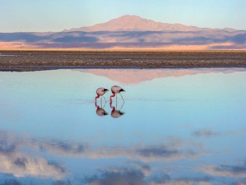 Chile - Sharon Lewin