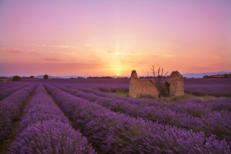 Work with the best light - I drove around for hours until I found the perfect spot facing west for sunset in the lavender fields of Provence, France.