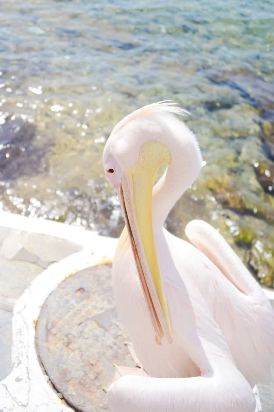 Mykonos Petros the Pelican - The Best photography locations by The Wandering Lens