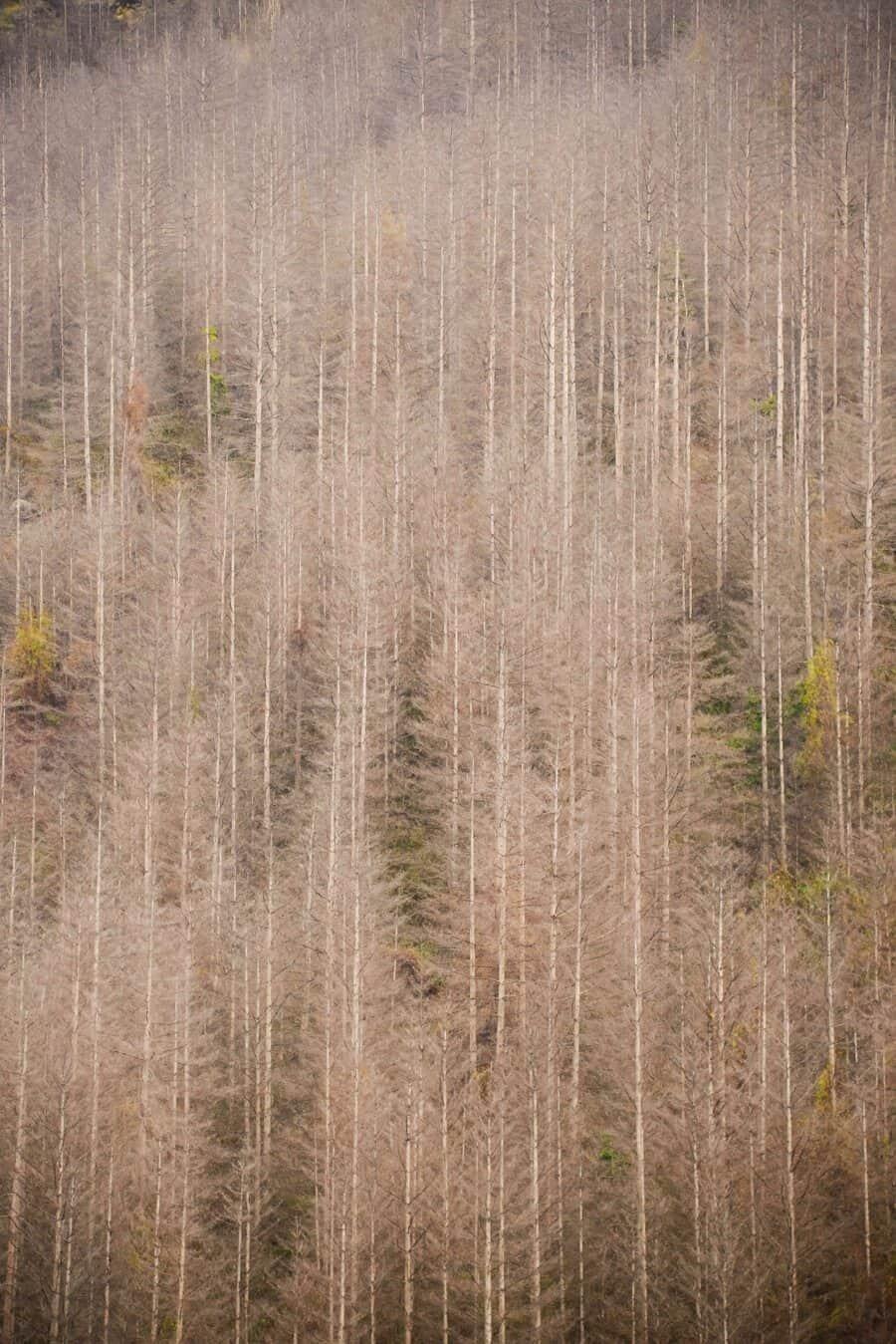 Mountain Designs - Lisa Michele Burns - New Zealand (4)