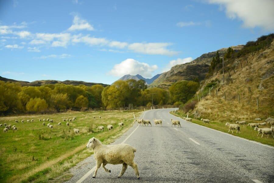 Mountain Designs - Lisa Michele Burns - New Zealand (6)