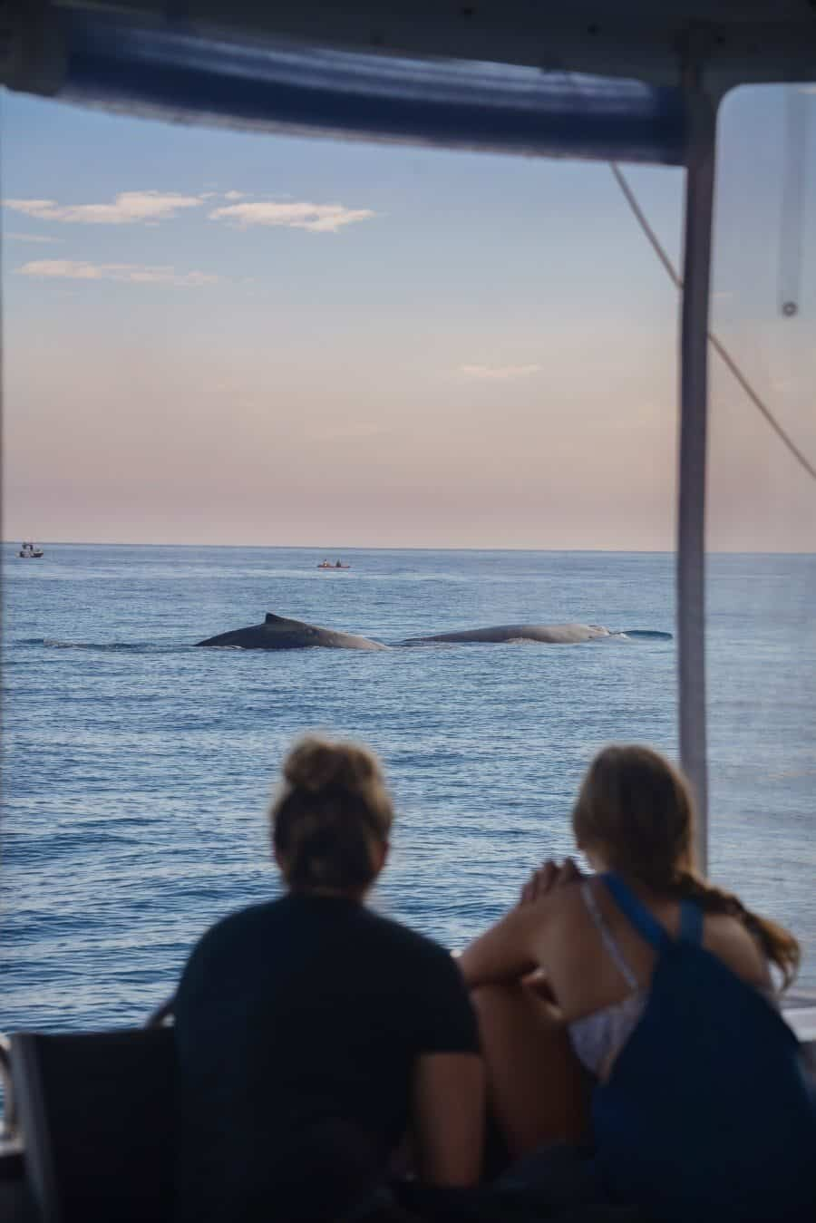 sunshine-coast-whale-swim-queensland-australia-01