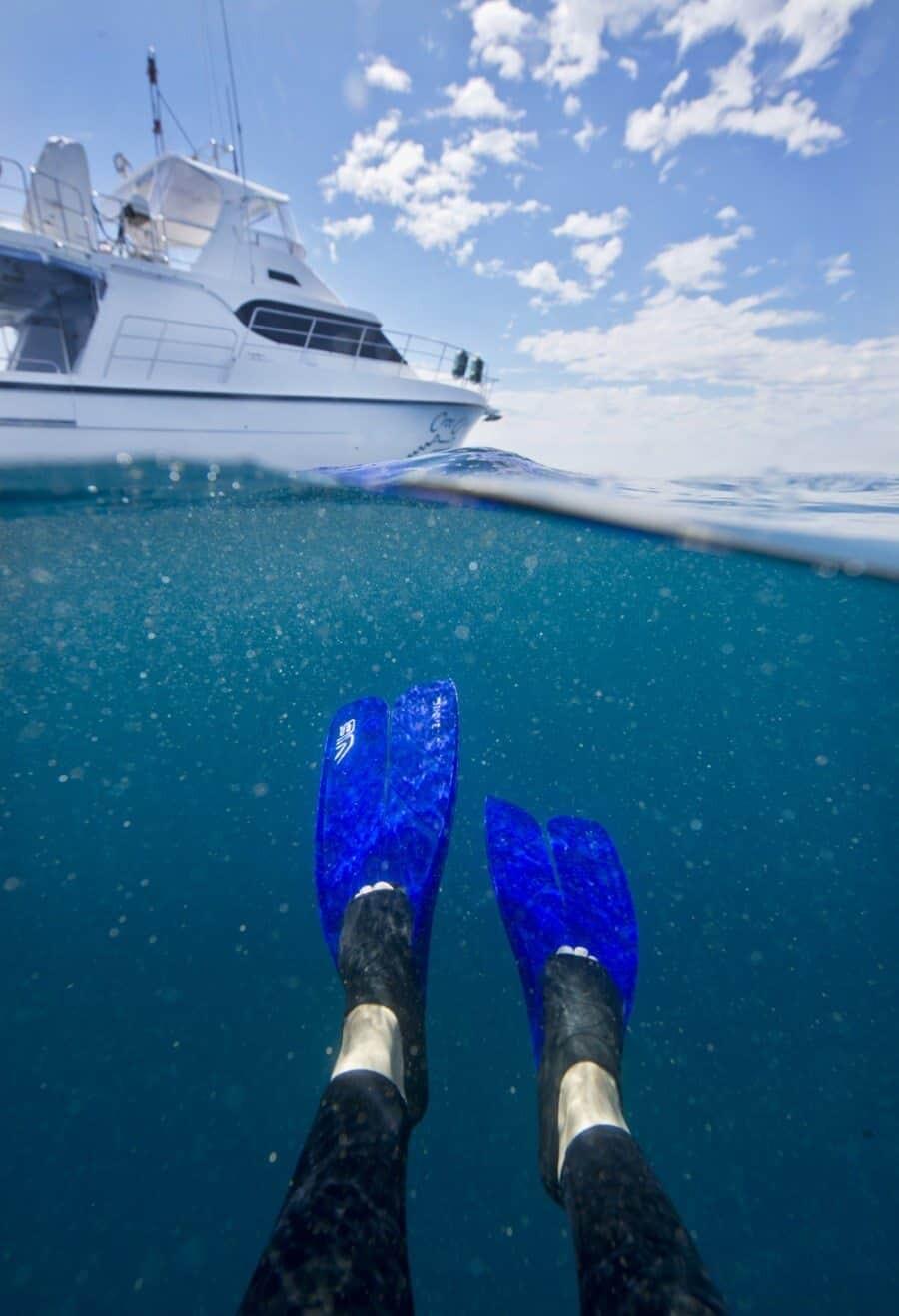 sunshine-coast-whale-swim-by-the-wandering-lens-sunreef-mooloolaba-7