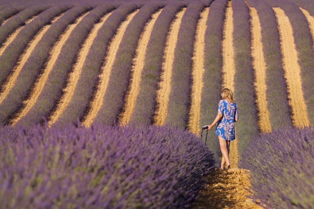 Lavender Fields in Provence France by The Wandering Lens
