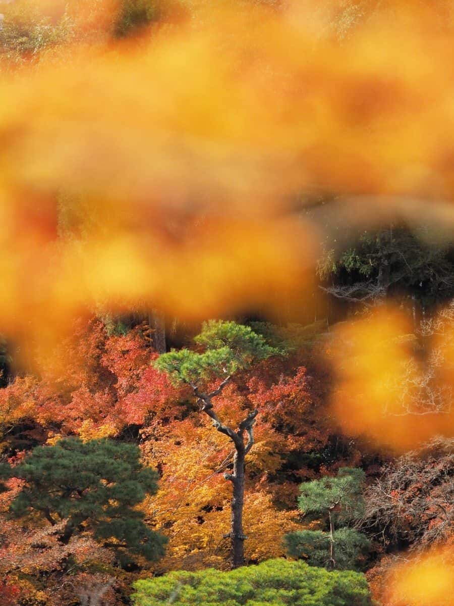 Japan Autumn Travel, Photography spots for autumn foliage in Kyoto and Tokyo