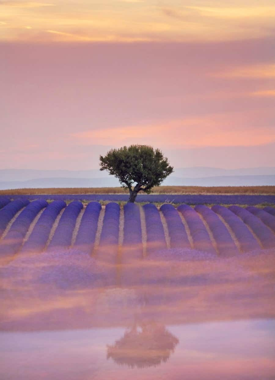 Creating Reflections - Lavender Fields of Provence, France