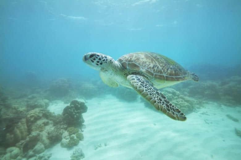 Mackay Cay - Cape Tribulation, Queensland, Australia