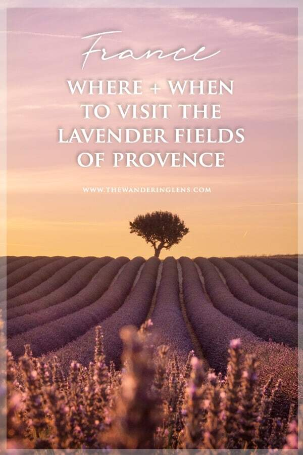 Lavender fields of Provence, France - a guide to when and where to visit for the most beautiful lavender fields in France.
