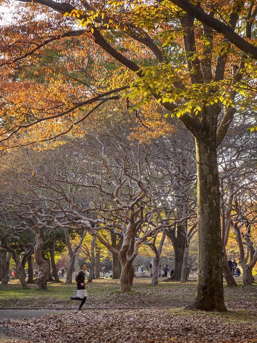 Yoyogi Park, Harajuku - Tokyo Photography Locations