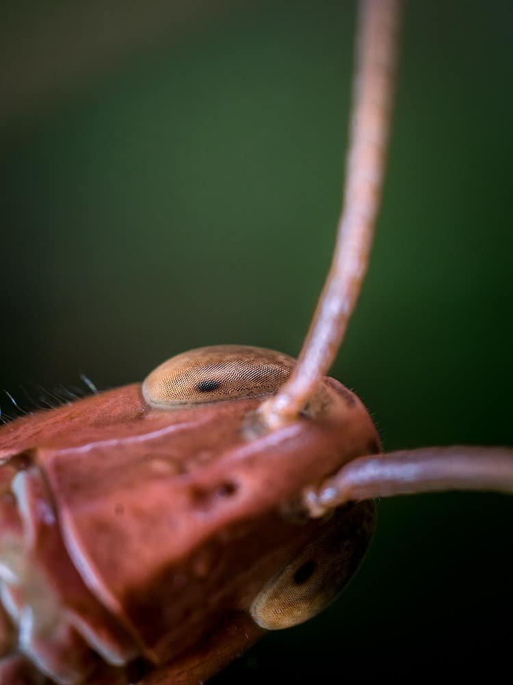 Macro Photography Image by Geraint Radford